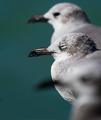 Water Bird Photograph - Bokehliceous Gulls Florida Keys by Mr Bennett Kent