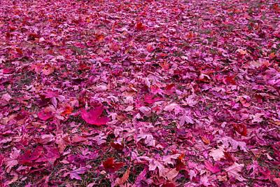 Pink Leaves Original by Abdullah Alnassrallah