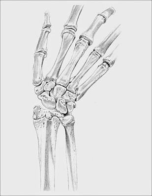 Human Joint Drawing - Bones Of The Hand by Kathryn Foster