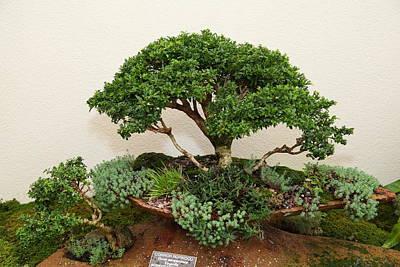 Bonsai Treet - Us Botanic Garden - 01131 Print by DC Photographer