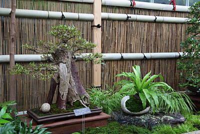 Bonsai Treet - Us Botanic Garden - 01133 Print by DC Photographer