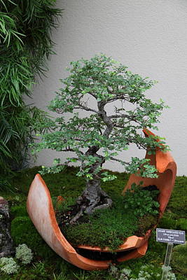 Bonsai Treet - Us Botanic Garden - 01138 Print by DC Photographer