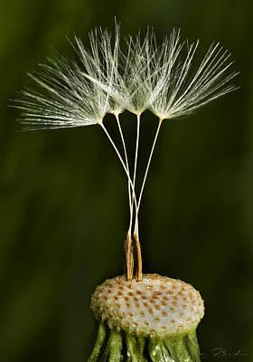 Brite Photograph - Bonus Wish by Iris Richardson