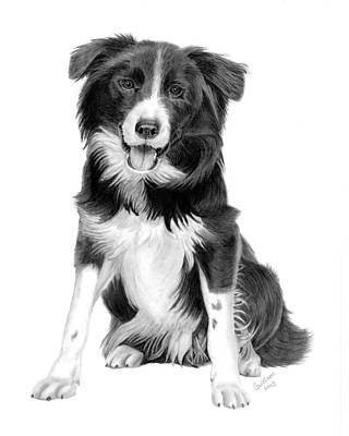 Border Collie Original by Carol Doran