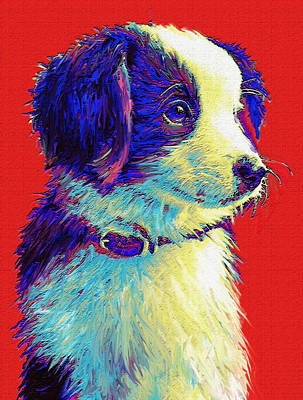 Pet Portraits Digital Art - Border Collie Puppy by Jane Schnetlage