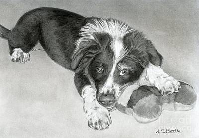 White Drawing - Border Collie Puppy by Sarah Batalka