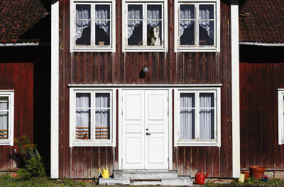 Borzoi Dog In The Window Of Old House Print by Christian Lagereek