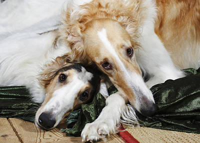 Borzoi Dogs In Love Print by Christian Lagereek