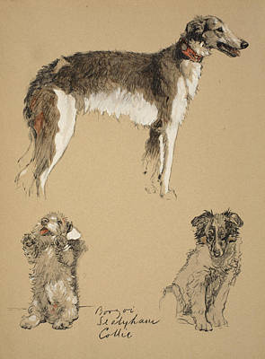 Sealyham Drawing - Borzoi, Sealyham And Collie, 1930 by Cecil Charles Windsor Aldin
