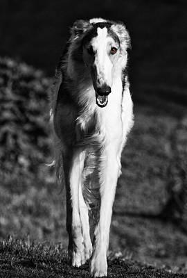 Borzoi Sigh Hound Dog Print by Christian Lagereek