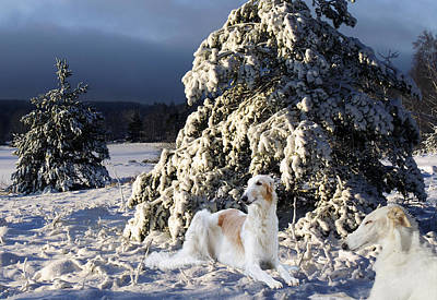 Borzoier Russian Hounds In A Winter Landscape Print by Christian Lagereek
