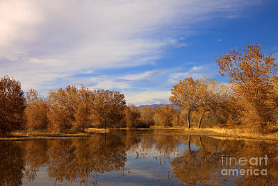 Leave Photograph - Bosque Del Apache Reflections by Mike  Dawson