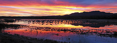 Geese Photograph - Bosque Del Apache by Steven Ralser