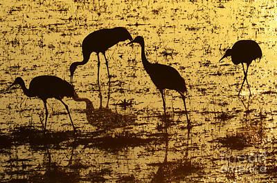 Bosque El Apache Golden Pond Print by Bob Christopher