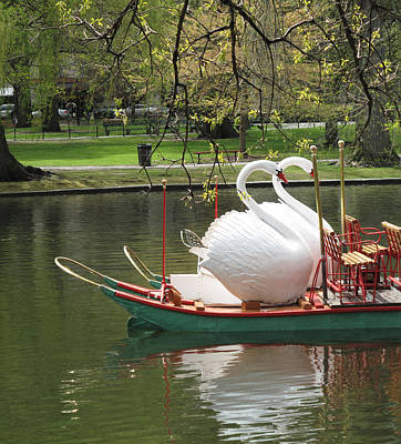 Boston Swan Boats Print by Barbara McDevitt
