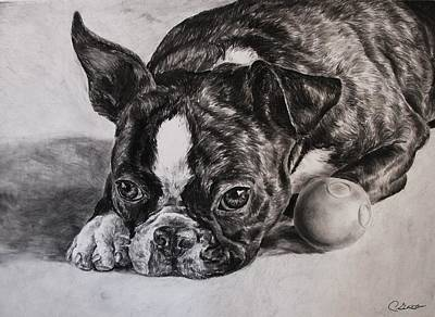 Boston Terrier Dog Original by Cassandra Gallant