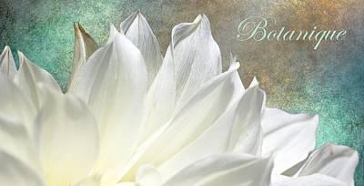 Botanique Print by Barbara Chichester