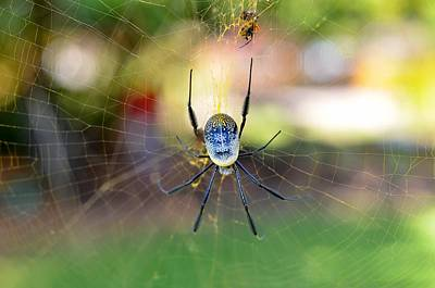Arachnid Photograph - Bottoms-up by Leana De Villiers