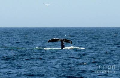 Whale Photograph - Bottoms Up by Paul Smith