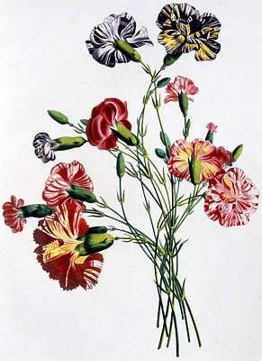 Carnation Painting - Bouquet Of Carnations by Jean-Louis Prevost