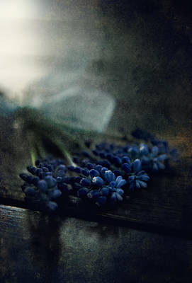 Bouquet Of Grape Hyiacints On The Dark Textured Surface Print by Jaroslaw Blaminsky