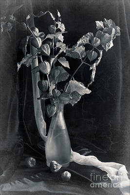 Bouquet Of Physalis Print by Sviatlana Kandybovich