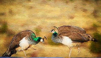 Peafowl Photograph - Bow And Curtsy by Donna Kennedy