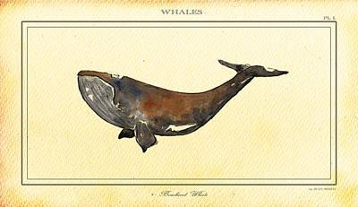 Whale Digital Art - Bowhead Whale by Juan  Bosco