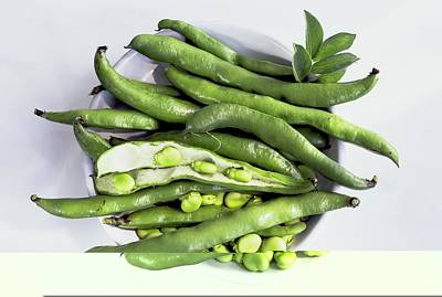 Bowl Of Broad Beans Print by Science Photo Library