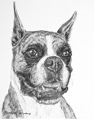 Boxer Dog Sketch Print by Kate Sumners