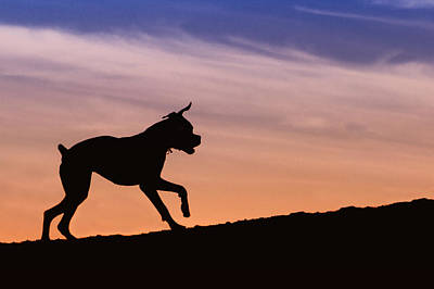 Boxer Dog Sunset Silhouette Print by Stephanie McDowell