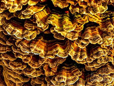 Bracket Fungus Print by Robert Bales