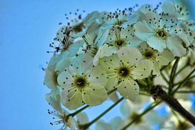 Flower Photograph - Bradford Pear I by Lesa Fine