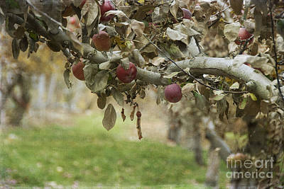 Branch Of An Apple Tree Print by Juli Scalzi