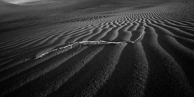 Widescreen Photograph - Branch Out In The Desert by Peter Tellone