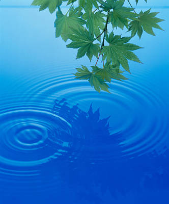 Deep Blue Photograph - Branch With Green Leaves Suspended by Panoramic Images