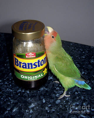 Peach-faced Lovebird Photograph - Branston Pickle by Terri Waters