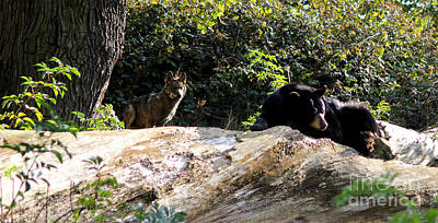 Black. Timber Wolf Photograph - Brave One by Melissa Petrey