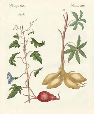 Potato Drawing - Bread Plants by Splendid Art Prints