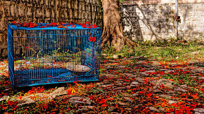 Brid's Cage Original by Utkarsh Solanki