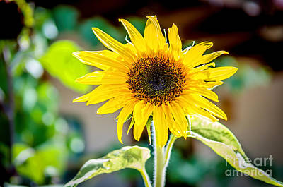 Bright And Sunny Print by Bob and Nancy Kendrick