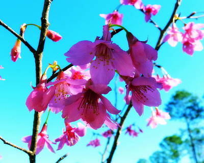Southern Photograph - Bright Blossoms by Carla Parris
