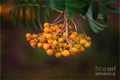 Abstract Photograph - Bright Bursting Berries Garden Art By Omaste Witkowski by Omaste Witkowski