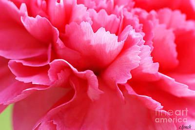 Bright Carnation Print by Carol Lynch