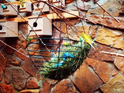 Photograph - Bright Wings by Alicia Forton