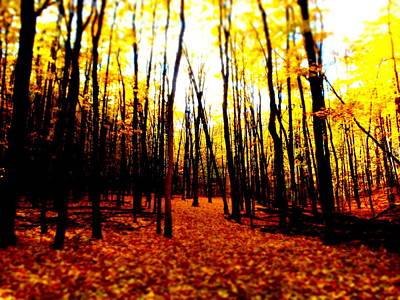 Photograph - Bright Woods by Alicia Forton