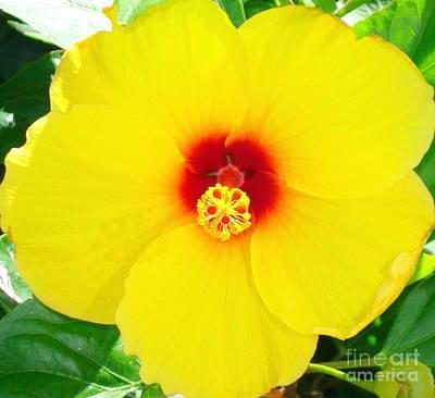 Hibiscus Photograph - Bright Yellow Hibiscus by Rachel Munoz Striggow