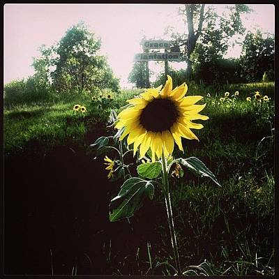 Sunflowers Photograph - Brighten Your Day  by Scott Pellegrin