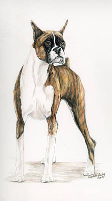 Boxer Dog Art Drawing - Brindle Boxer by Charlotte Yealey