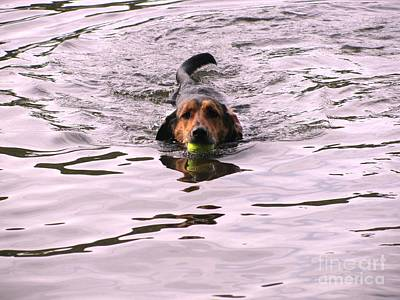 Dog In Lake Painting - Fetch Photo by Grace Liberator